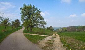 fork-road-spring-landscape-44271605